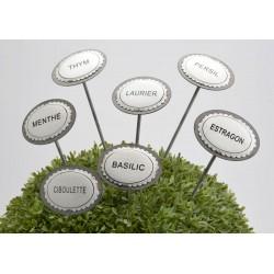 Pic plante aromatique Amadeus