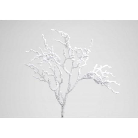Branche Vancouver neige h 74 Amadeus